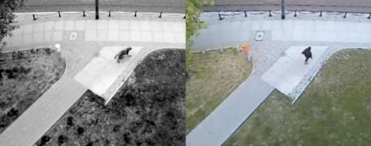 Jakub Jasiukiewicz, Canis Lupus, 2009. Output & input (video). Courtesy of the artist.